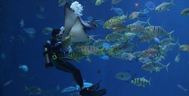 voyage plongée en Polynésie